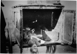 Leichen im Ghetto // Fotoalben 1. Kompanie Polizeibataillon 61, freundlicherweise vom Prospero-Verlag zur Verfügung gestellt